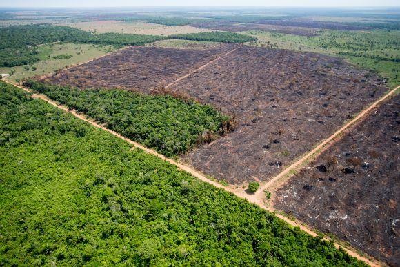 Mato Grosso pode perder até 4% do PIB se Novo Código Florestal for derrubado no STF