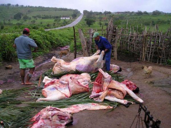 MPF investiga MT por manter abatedouros clandestinos de gado