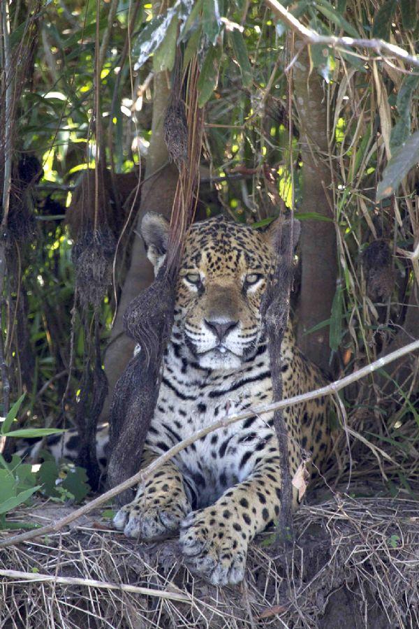 Preservação Do Património Natural: Ecólogo Dos EUA Desenvolve Projeto Para Preservação Do