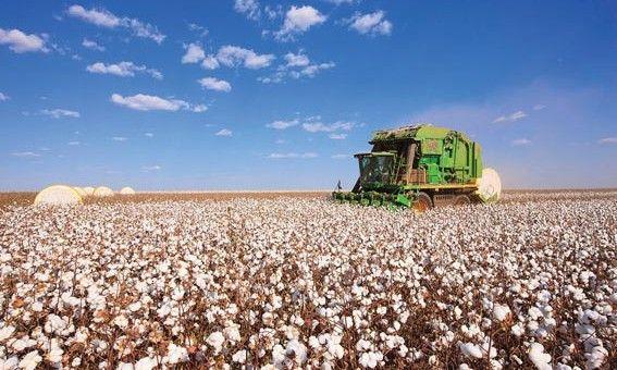 Com 1 milhão de toneladas, safra de algodão em Mato Grosso terá aumento de 14%