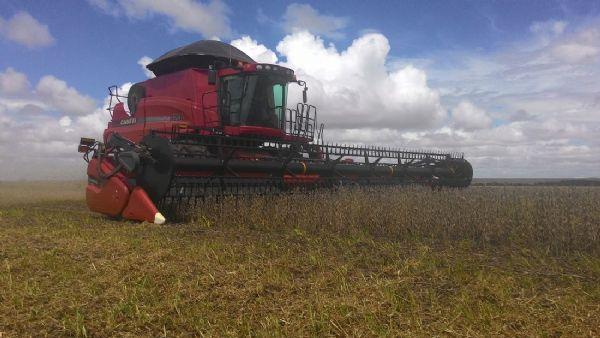 Chuva causa alta umidade na soja e armazéns pedem que produtores esperem para colher em Mato Grosso