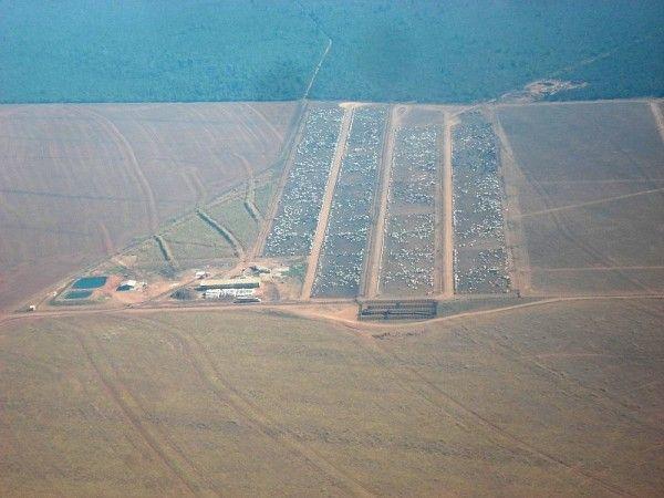 Fazenda do Grupo Pinesso em Mato Grosso tem confinamento de gado e produção agrícola