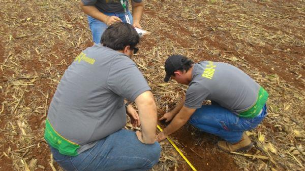 De olho no céu, produtores de Mato Grosso seguram vendas à espera de bons preços