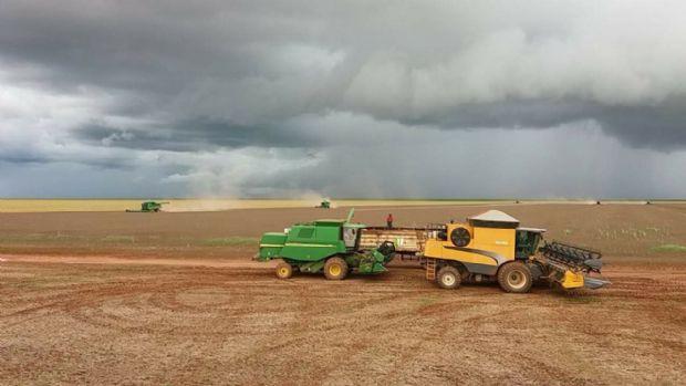Soja começa a apodrecer na lavoura com excesso de chuvas em Campo Novo