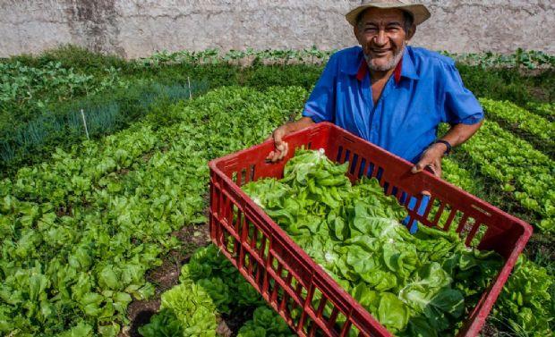 Nova lei beneficia pequenos produtores rurais de Santo Antônio de Leverger