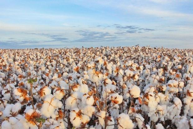 Entidade baiana se posiciona contra a sobretaxação do agronegócio em MT