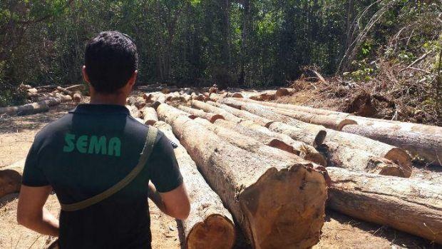 MP derruba lei da Assembleia e Mato Grosso garante R$ 5 milhões com taxação de madeira