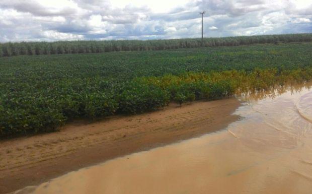 Chuva deixa em xeque produção recorde de 30,4 mi/t de soja em Mato Grosso