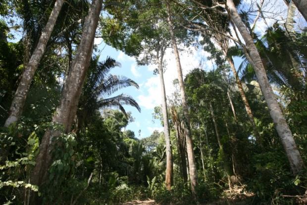"""""""Piracema da madeira"""" proíbe exploração de Manejo Florestal por 60 dias"""
