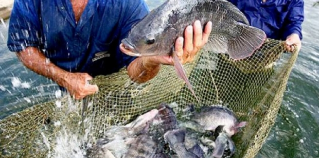 Mato Grosso recebe a maior feira de peixes nativos de água doce do país
