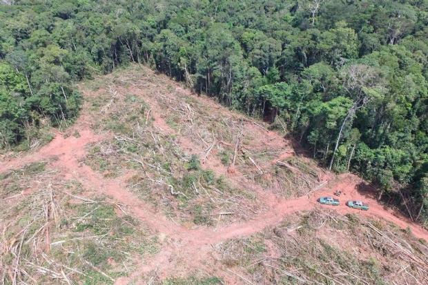 Ibama multa desmatadores em R$ 24 milhões e embarga 3,6 mil hectares em MT