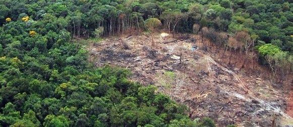 Desmatamento da Amazônia em MT passa de 26 mil hectares; indenizações chegam a R$ 2,8 bi