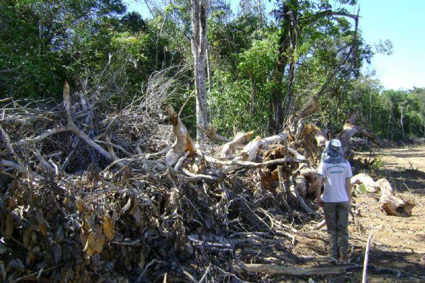 MT é responsável por 60% da área desmatada na Amazônia Legal, aponta pesquisa