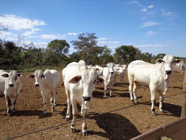 Famato pede revisão da pauta do gado diante queda de preço na arroba provocada pela Operação da PF