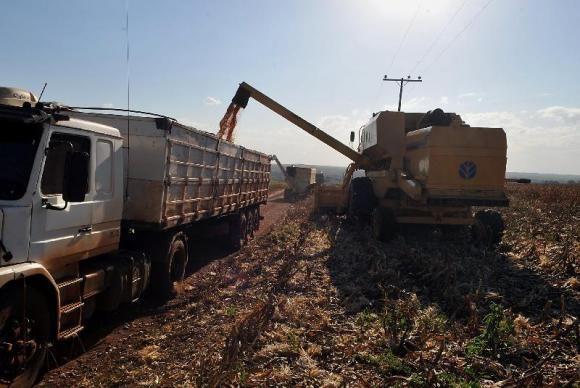 Conab aponta alta de 10 mi/t e produção de grãos em Mato Grosso deve chegar a 53 mi/t