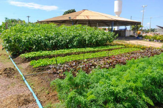 Prefeitura de Sinop levará para a Exponop mini fazenda voltada para agricultura familiar