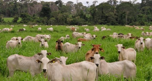 Mato Grosso assume liderança com exportação de mais de 23 toneladas de carne bovina