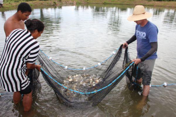 """Quarto maior produtor de peixe, MT vê piscicultura """"travada"""" por falta de indústria"""