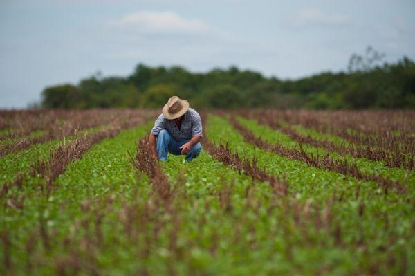 Área do milho 2ª safra é garantida com avanço do plantio da soja