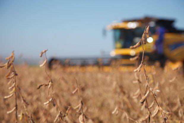 Monsanto abre mais de 40 vagas de estágio entre Mato Grosso e outros nove Estados