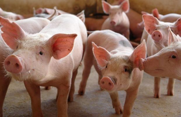 Acrismat denuncia descumprimento de liminar e animais sofrem sem insumos