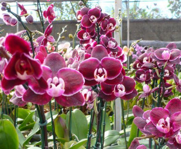 14º Festival das Flores começa nesta quinta com produtos de preço até 70% mais baixo que o mercado
