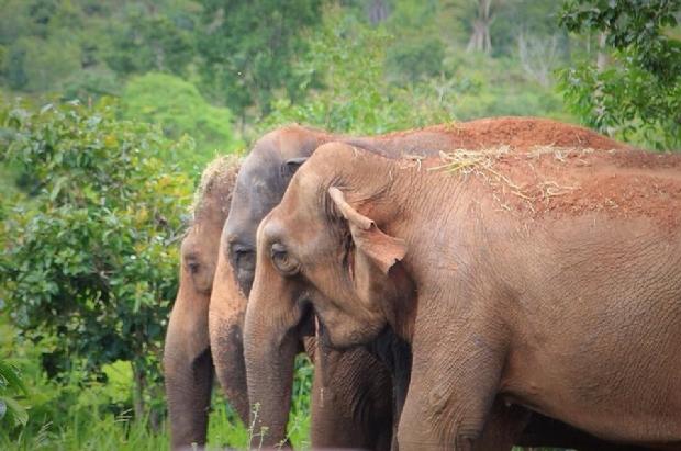 Terceira elefanta chega ao Santuário em Chapada após vida em circos