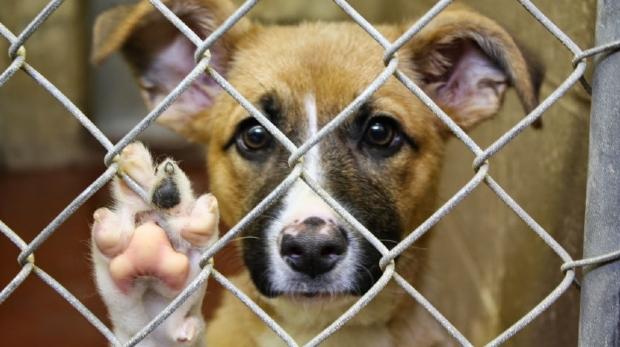 Com 125 animais abrigados, associação pede ajuda para não fechar as portas em MT