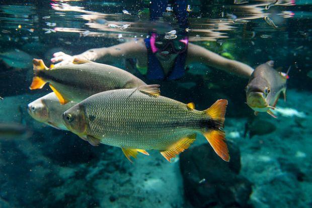 'Circuito mato-grossense de mergulho' é criado e engloba Cáceres, Primavera do Leste e Nobres