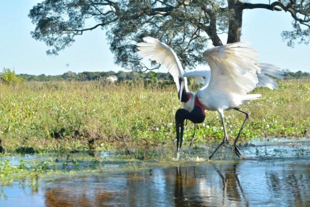 Biólogos participam da elaboração de ações de sustentabilidade em hotel no Pantanal