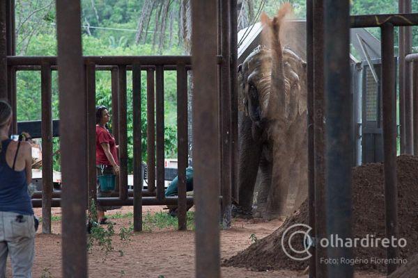 Maia, primeira elefanta a desembarcar no Santuário, comemora jogando terra pra cima