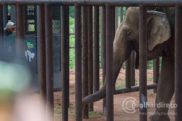 Dia do elefante é lembrado por Santuário de Elefantes Brasil, que mantém animais em Chapada dos Guimarães