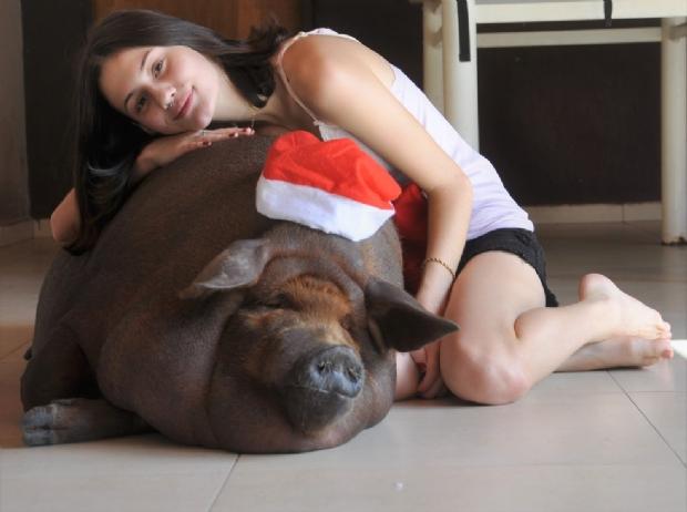 Estudante de Cuiabá cria porca de estimação em casa; animal toma banho todo dia e tem cinco refeições diárias