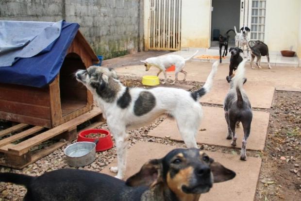Opa-MT pede doações de roupas e sapatos para bazar animal