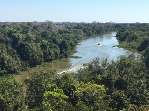 Hotel no Pantanal inaugura observatório de pássaros com 16 metros de altura