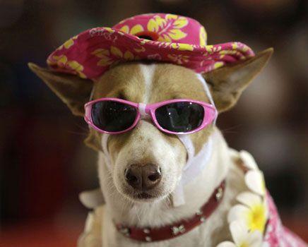 Desfile de cachorros lança tendências do mundo pet e ajuda instituição de proteção animal
