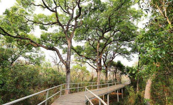 Novo Parque em Várzea Grande terá trilhas suspensas para contemplação da natureza