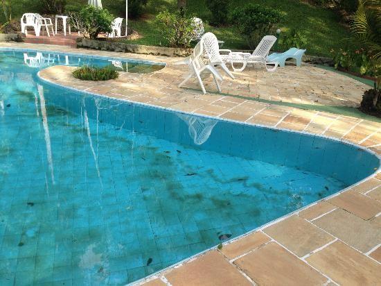 Piscinas podem ser foco de reprodu o do mosquito da for Focos de piscinas