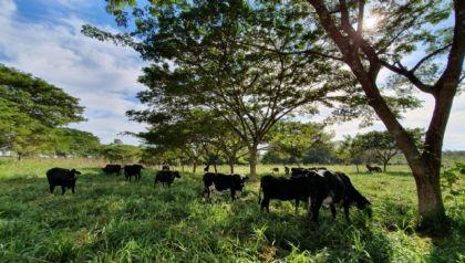 Pecuária sustentável beneficia mais de 1.650 famílias na região amazônica de Mato Grosso