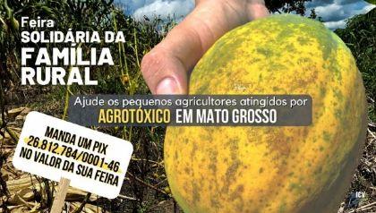 Campanha pede ajuda para pequenos produtores que tiveram colheitas atingidas por agrotóxicos em MT