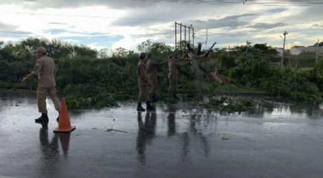 Tempestade deixa 22 regiões de Cuiabá e VG sem energia e causa queda de árvores