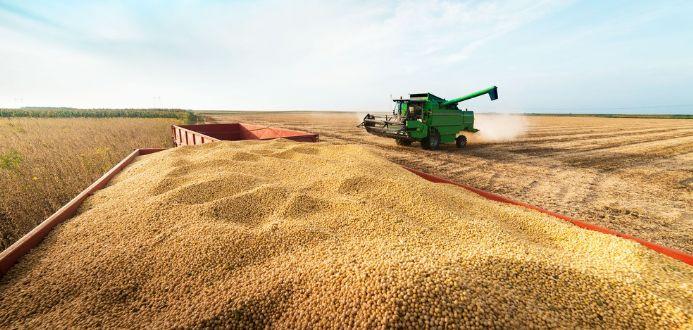 Soja convencional se torna aposta de nicho seleto de mercado para produtores de MT
