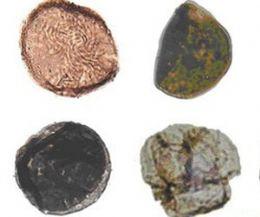 Fósseis de primeiras plantas terrestres são achadas na Argentina
