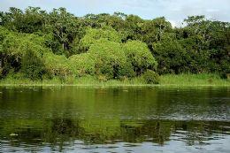 Novo Código Florestal deve proibir desmatamento em florestas nativas, diz ministra