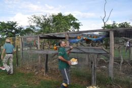 Araras apreendidas do tráfico de animais são devolvidas à natureza