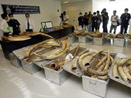 Polícia acha uma tonelada de presas de elefante em aeroporto da Tailândia