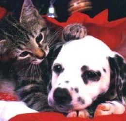 Cães e gatos também precisam de protetor solar