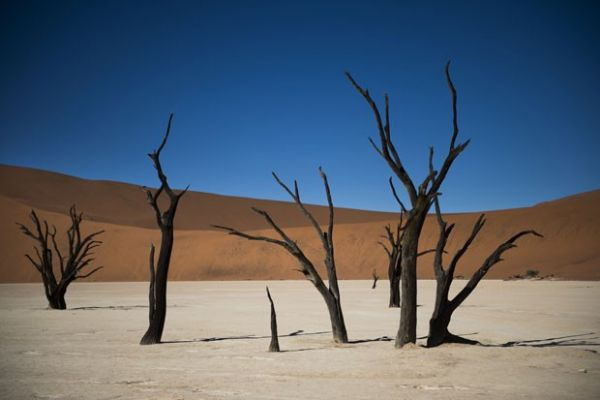 Árvores mortas na região de Deadvlei, no deserto de Sussublei, na Namíbia