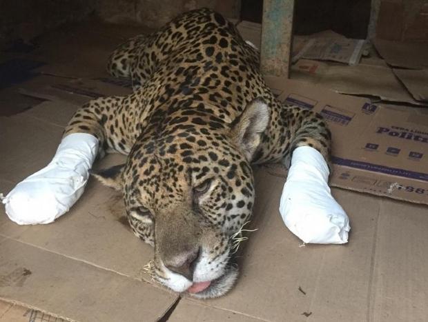 ONG pede doações para continuar socorrendo animais atingidos pelo fogo