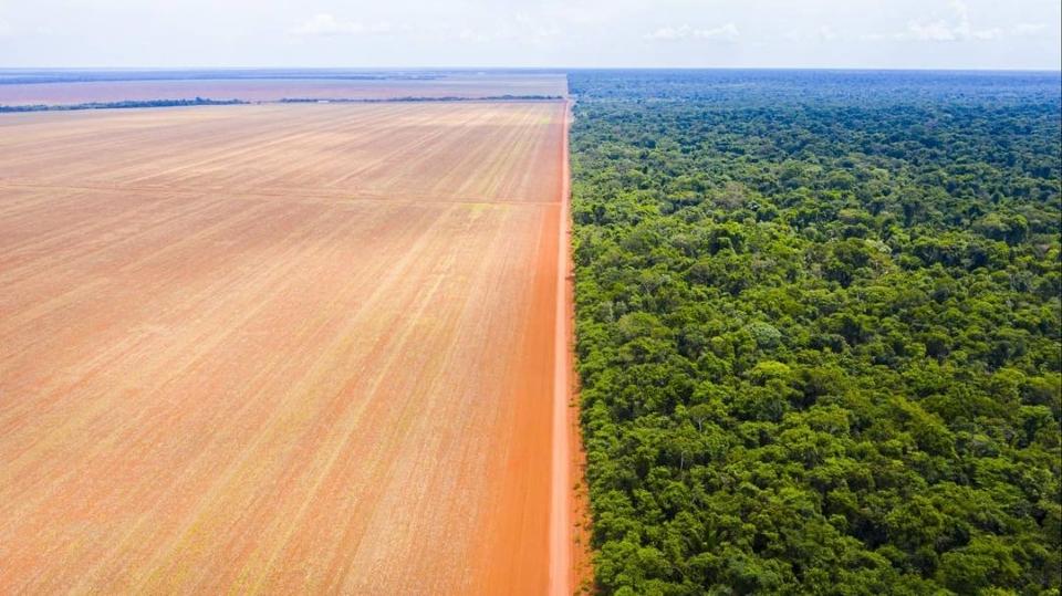 Divisa entre Território Indígena do Xingu e entorno mostra contraste entre a floresta e a plantação.
